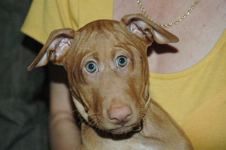 Vagy akkor, ha kutyája ilyen gülü szemekkel nézné? / Fotó: boredpanda.com