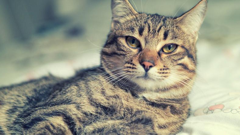 amikor a macskák megismerjék egymást katie leung társkereső történelem