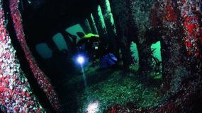 Szkocja - Scapa Flow - podwodny świat