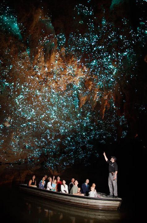 Waitomo Glowworm Caves - jaskinie świecących robaczków