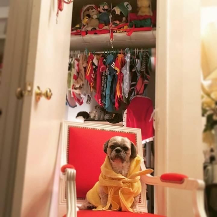 A kutyusnak külön ruhatára van /Fotó: Northfoto