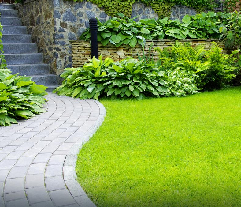Trawnik idealny