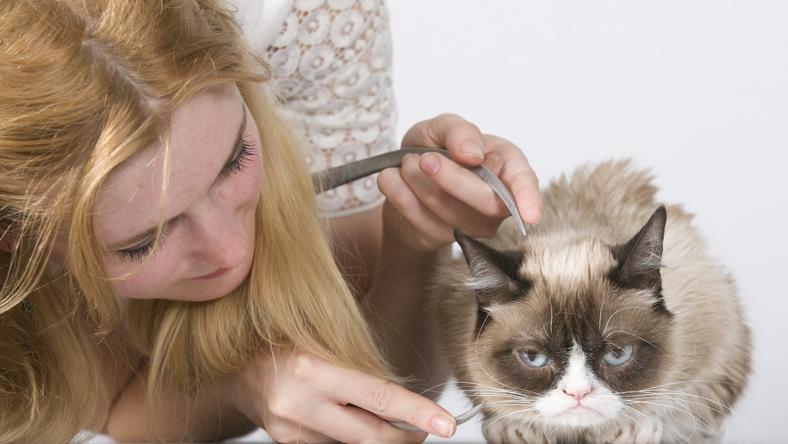 Az egész internet imádja Grumpy Catet/ Fotó: Northfoto