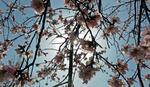 Danas počinje proleće