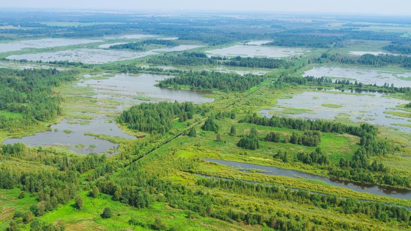 Krajobraz Białorusi, lasy i mokradła