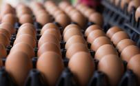 Skażone jaja w UE. Rząd Belgii wkracza do gry