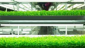 Pionowe farmy przyszłością produkcji rolnej