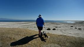 Salton Sea - słone jezioro w Kalifornii to bomba biologiczna z opóźnionym zapłonem?
