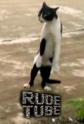 "Rude Tube: ""Szalone koty"""