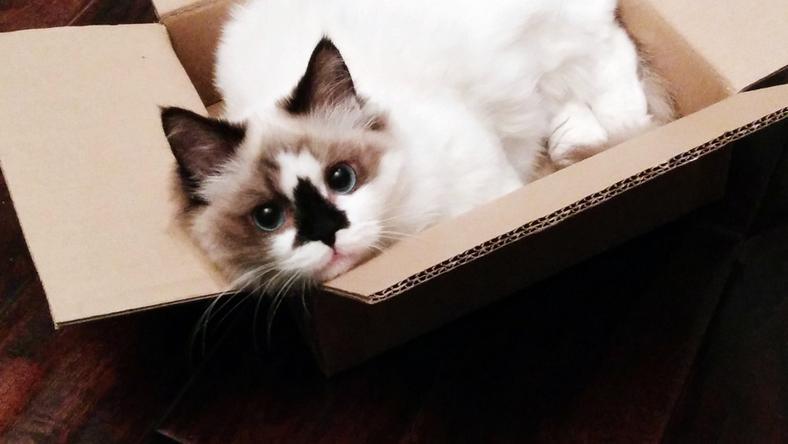 A kíváncsi cicák bebújtak a dobozba, ami a tűzhelyen volt, viszont véletlenül közben sikerült beindítaniuk, így beindult a tűzjelző. /Fotó: Northfoto (illusztráció)
