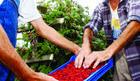 Bez dogovora u Vladi Srbije sa malinarima