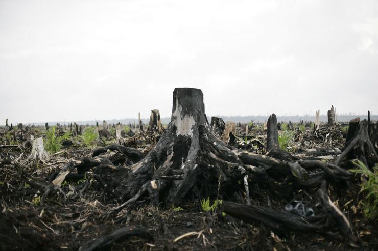 EUban 20%-ban korlátozzák a minimális erdőméret nagyságát országonként / Fotó: EUROPRESS-GETTYIMAGES