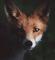 OČI U OČI S PRIRODOM Nestvarne fotografije životinja iz skandinavskih ZAČARANIH ŠUMA