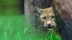 Niezwykłe fotografie polskiej przyrody - od Tatr po Morze Bałtyckie
