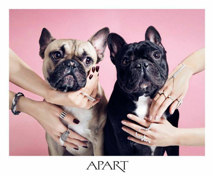 Urocze psy w kampanii Apartu