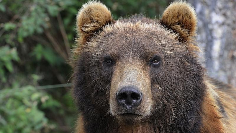 bieszczady niedźwiedź odwiedzi� leśniczego podr243że