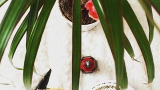 Ślubny talizman od Louboutin