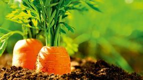 ABC ogrodnika - kalendarz prac