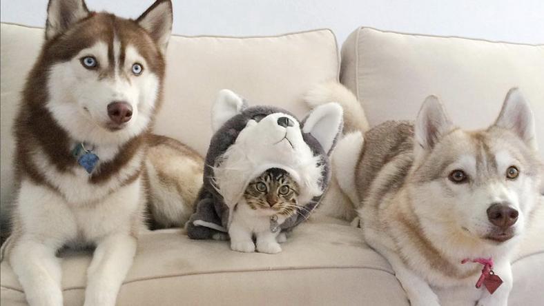 A két husky befogadta az elárvult kiscicát, Rosie-t /Fotó: Profimedia-Reddot
