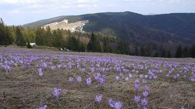 Polska - pomysły na wiosenne weekendy