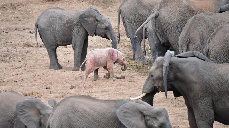 rózsaszín elefánt - Fotó: profimedia-reddot