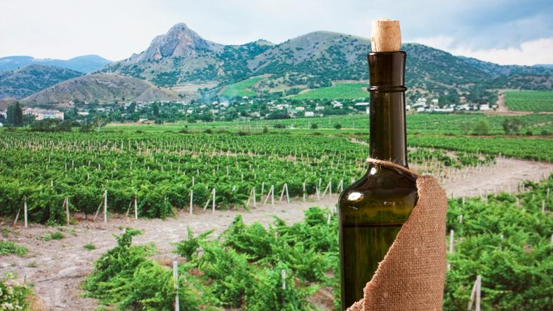 Romlik a bor - idegesek a gazdák / Fotó: Northfoto
