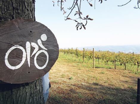 Topola: Vinograd, voćnjak i oranica površine 56 hektara