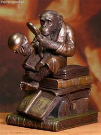 Veronese Szympans Ewolucja Szkatułka
