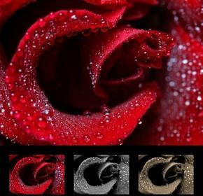 Wally Obraz róża 131