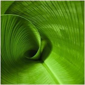 Liść bananowca - Obraz, reprodukcja