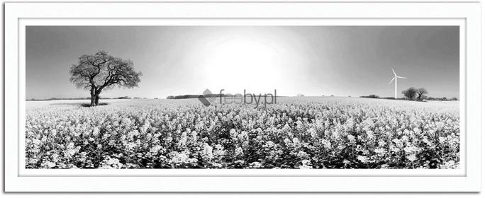 Feeby Pole rzepaku, Obrazy w ramie - Biały