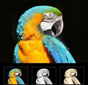 Wally Obraz papuga 163