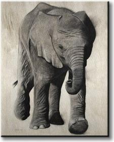Elephanteau - Obraz na płótnie