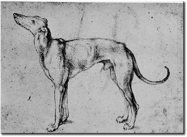 Bimago Obraz Greyhound 53788