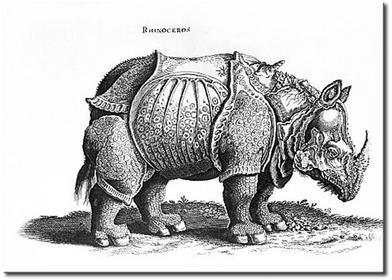 Bimago Obraz Rhino 53873