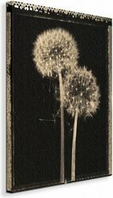Dandelions - Obraz na płótnie
