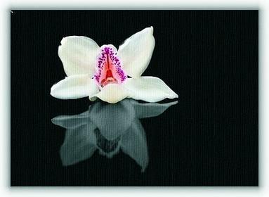 Biała orchidea - Obraz na płótnie