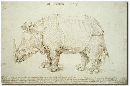 Bimago Obraz Rhinozeros 53801