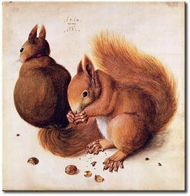 Bimago Obraz Squirrels 53853