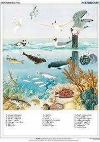 Meridian Ekosystem Bałtyku - tablica ścienna