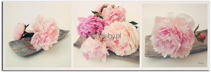Feeby Obraz Dekoracja kwiat róży, Deco Panel