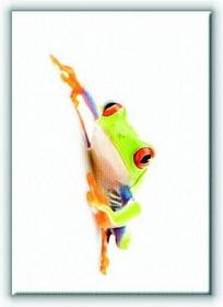 Żaba w Bieli - Obraz na płótnie