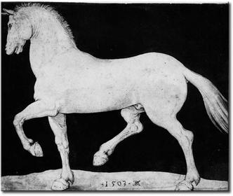 Bimago Obraz Horse 53785