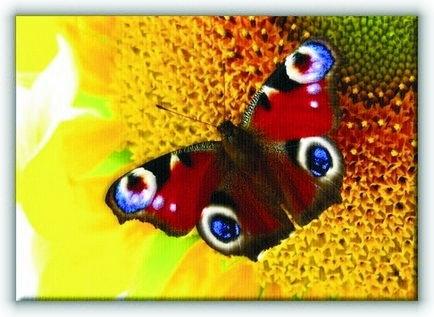 Motyl - Obraz na płótnie