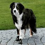 Trixie Walker Active - Ochronne Buty dla psa - różne rozMiary TX-19461-19467