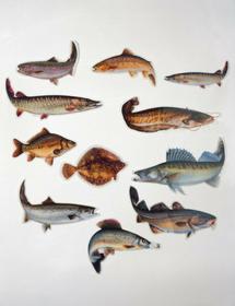 Exori Fishing Naklejka pstrąg Tęczowy 13cm