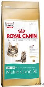 Royal Canin Maine Coon Kitten 400 Kg