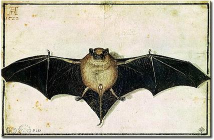 Bimago Obraz Bat 53849
