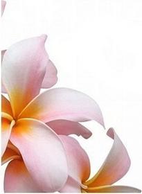 Kwiat frangipani - Obraz, reprodukcja