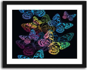 Motyle, Obrazy w ramie